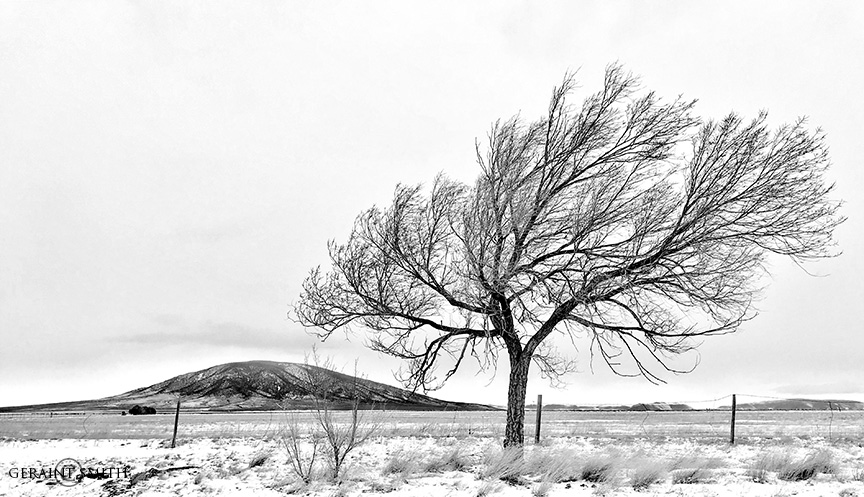 Ute Mountain Tree, Costilla, New Mexico