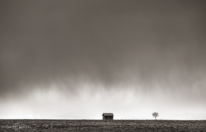 Homestead, Tree, San Luis Valley, Colorado