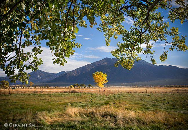New Cottonwood in El Prado, Taos NM