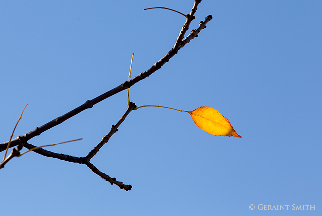 last leaf on the ash tree