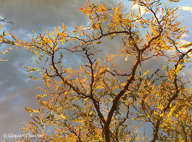 sunset on the locust tree arroyo seco new mexico
