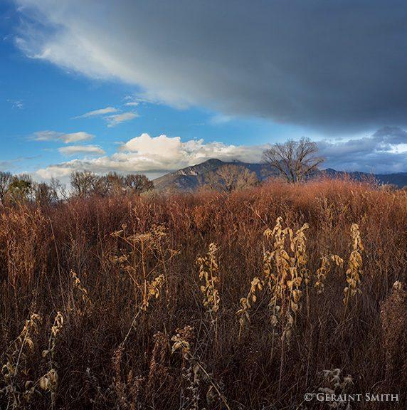 Taos Mountain, Red Willow, Milkweed