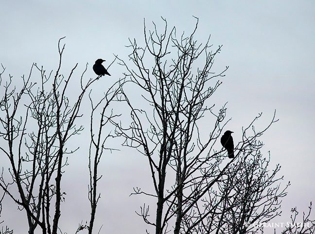 two_crows_8050-1-9091276