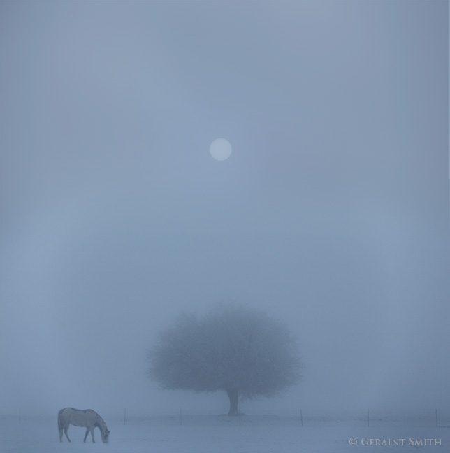 tree_horse_fog_san_luis_valley_0842_1062_1064_1-6507030