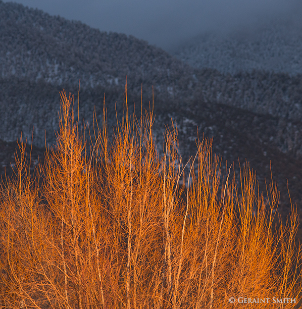 tree and sangre de cristo mountains