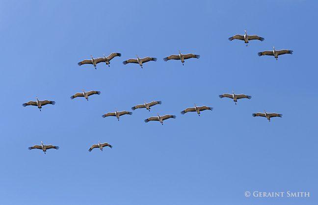 Sandhill Cranes Monte Vista NWR