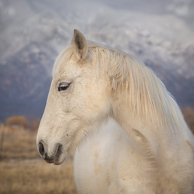white horse in the ranchitos valley taos new mexico
