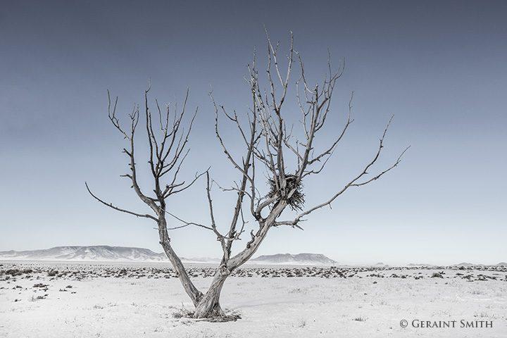 hawk_tree_san_luis_valley_0129-4081111