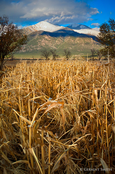 Cornfield In The Shadow Of Taos Mountain