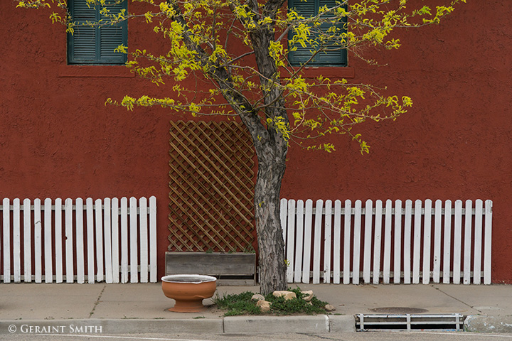 A tree a red wall and a white picket fence