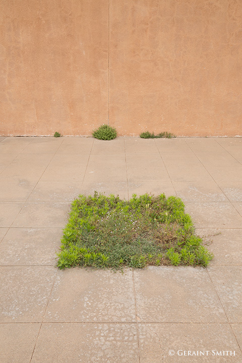 Urban Green Space landscape, tucumcari