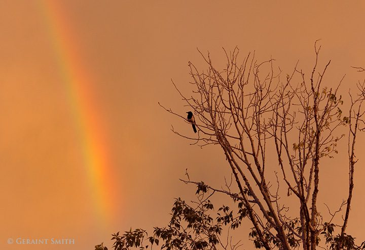Magpie and rainbow