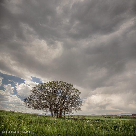 tree_copse_tierra_amarilla_4968-9865050