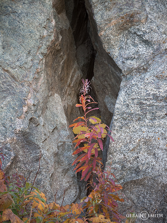 Granite Fall Color