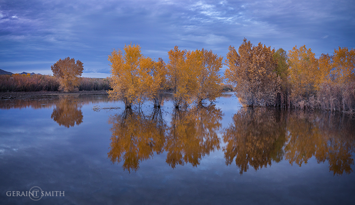 bosque_reflections_4302_4303-9329124