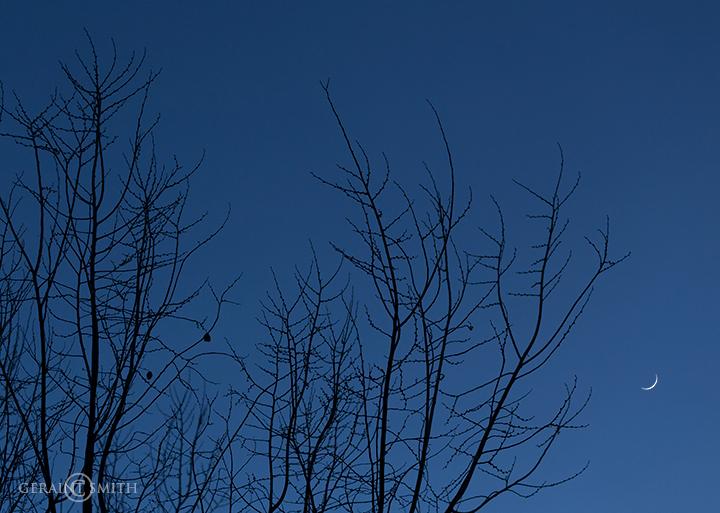 crescent_moon_winter_trees_4809-1132998