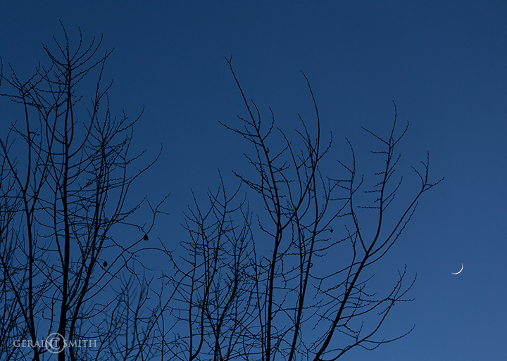 Winter Trees and crescent moon
