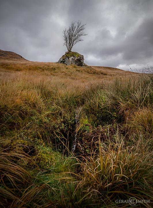 Highlands of Scotland Tree