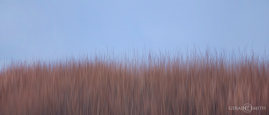 red_willows_blur_oil_7533-2810876