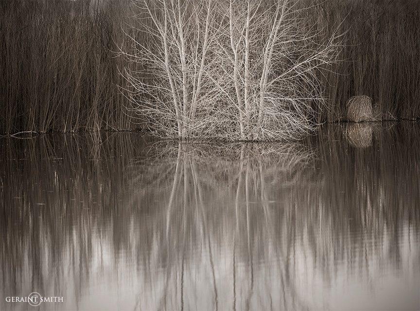 bosque_del_apache_willows_white_tree_9452-1_9454-1-2987288