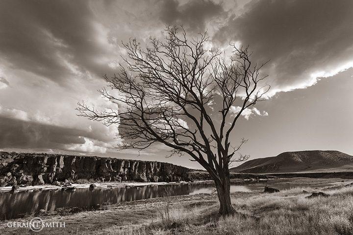 Rio Grande tree southern colorado