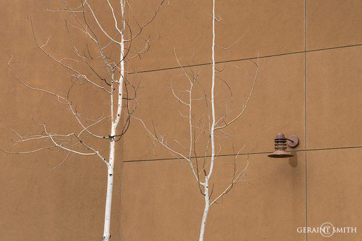 Urban Aspens, Santa Fe, New Mexico