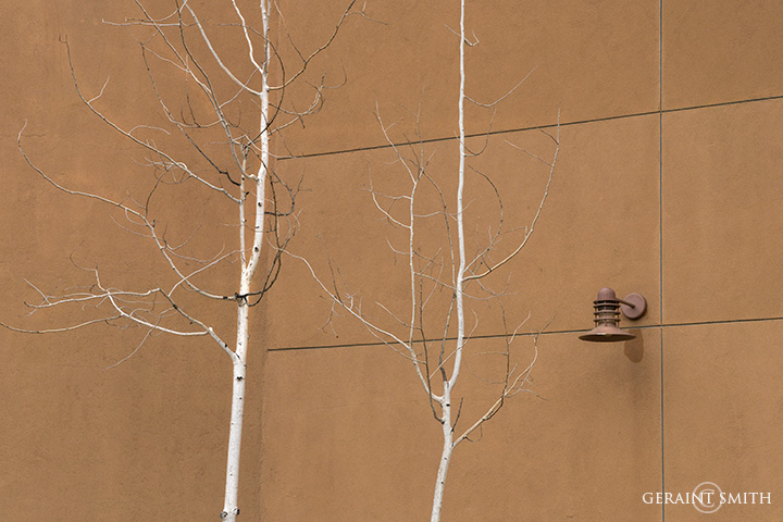 Urban Aspens, Santa Fe, New Mexico