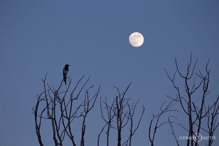 Magpie Moon, San Cristobal, NM