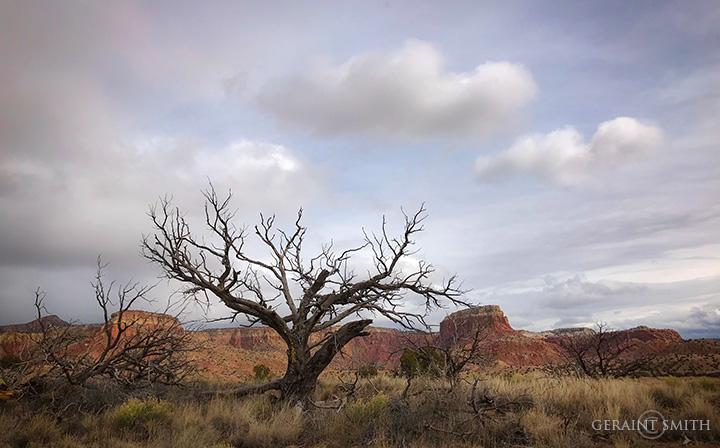 Orphan Mesa Ghost Ranch NM