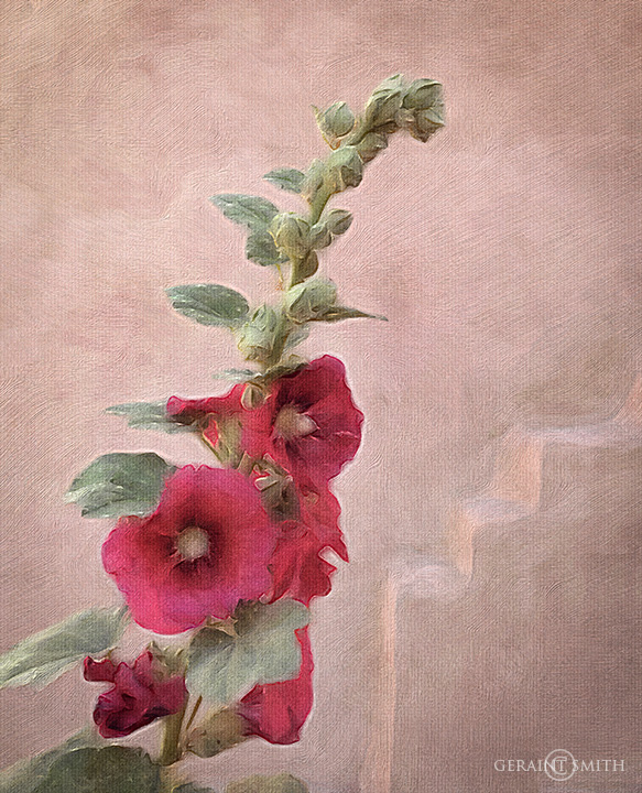 Hollyhock At The Saint Francis Church