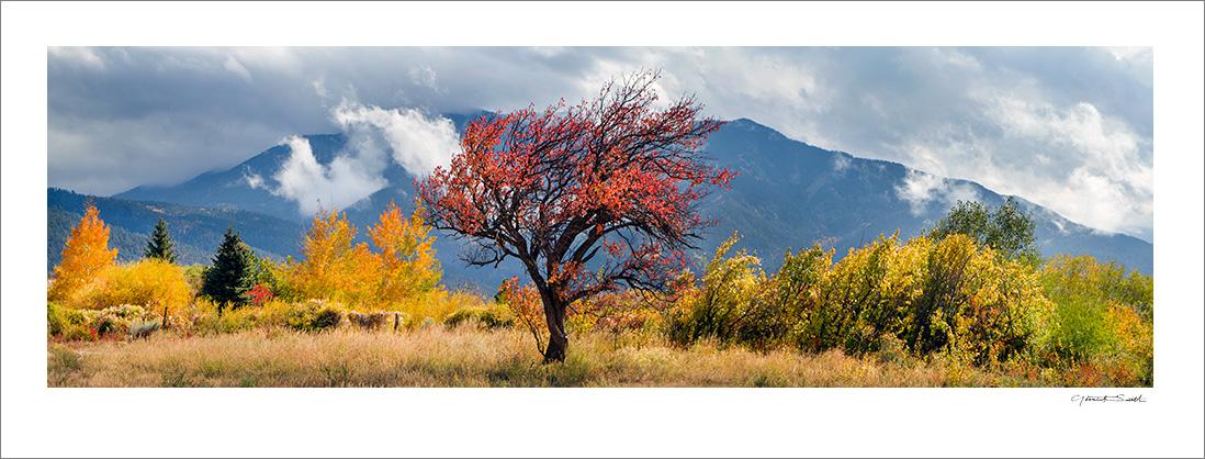 Apple Tree Fall