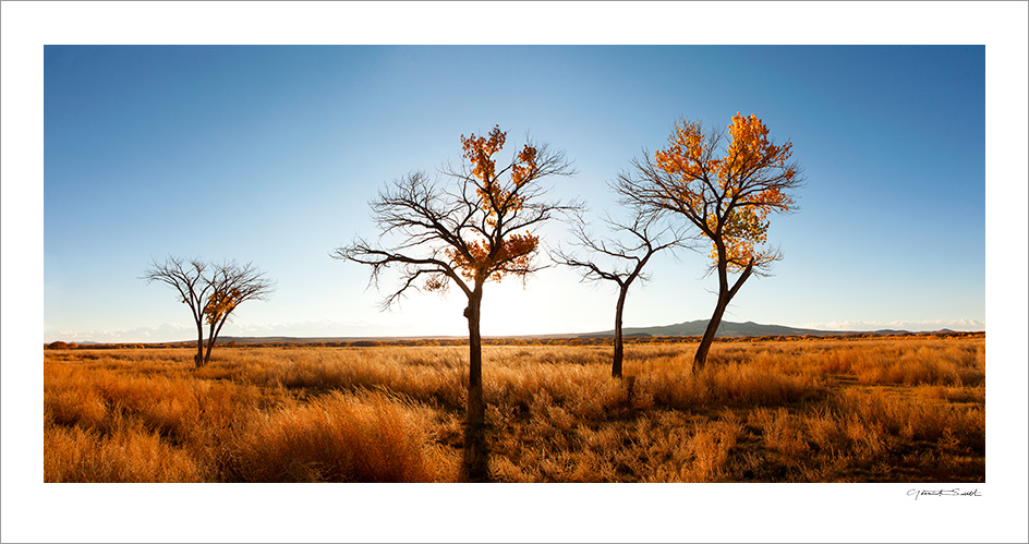 Bosque Trees