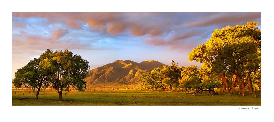 Taos Mountain Trees