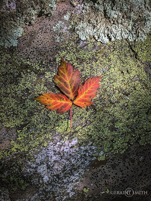 Italianos Trail, Leaf, Rock, Lichen