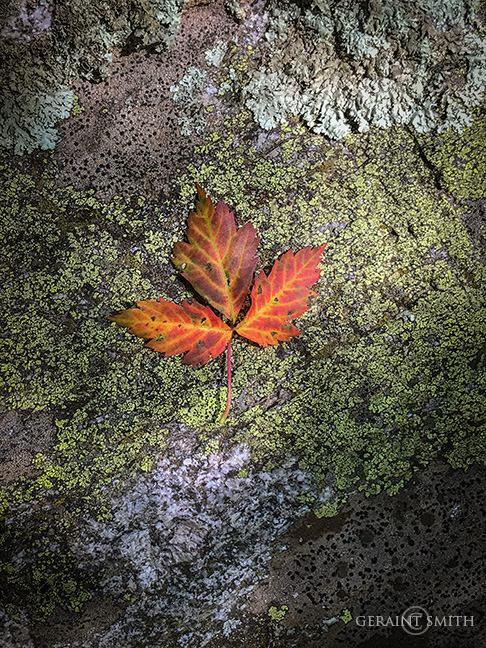 Italianos Trail, Leaf, Rock, Lichen