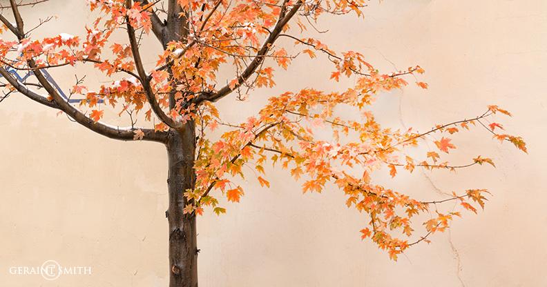 Tree Arroyo Seco, NM