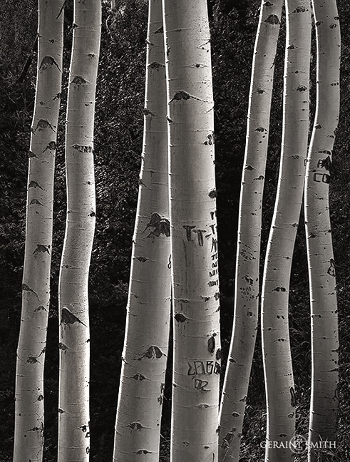 Forest Road In The Sangre de Cristo Mountains