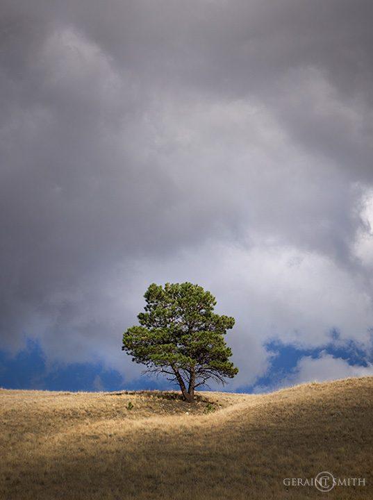 Bobcat Pass Lone Tree