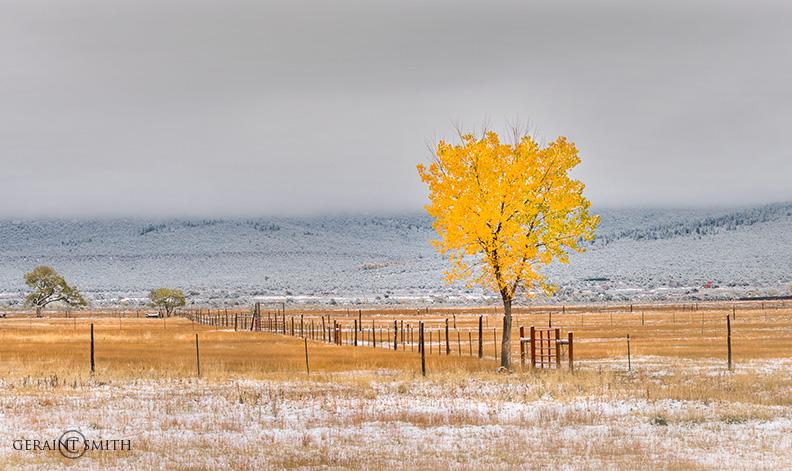 Cottonwood And Snow El Prado, NM