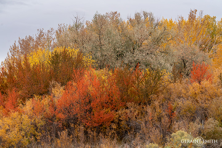 Colors Of Fall in The Arroyo Hondo Valley