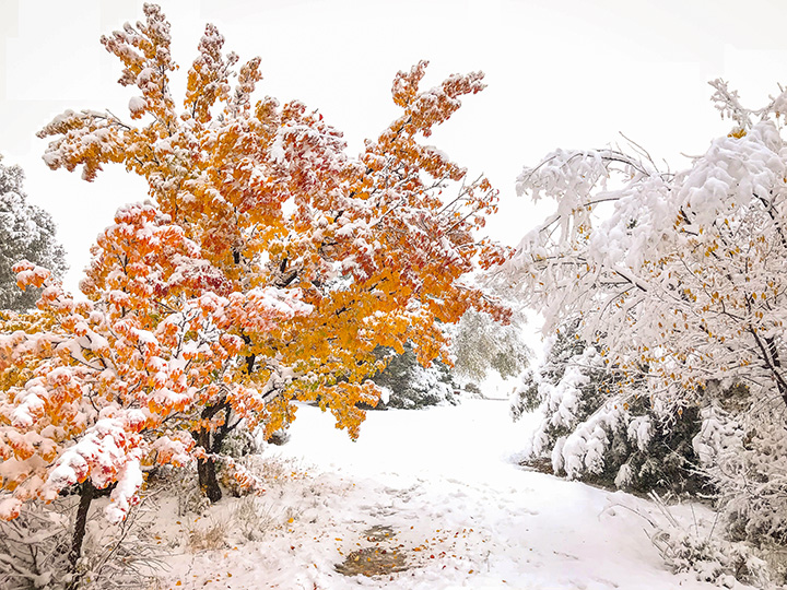 Morning Snow on Fall Colors