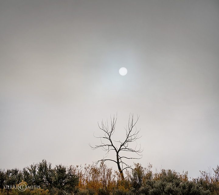 Solitary Tree and Sun through the Fog