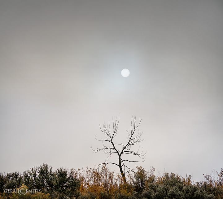 Solitary Tree and Sun through the Fog