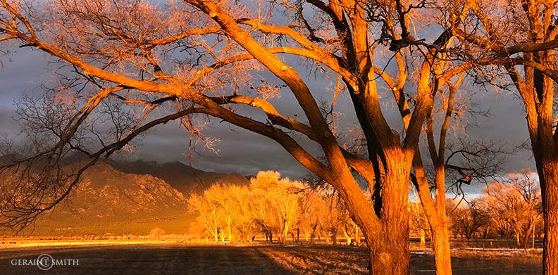 Golden Sunlight, El Prado Trees