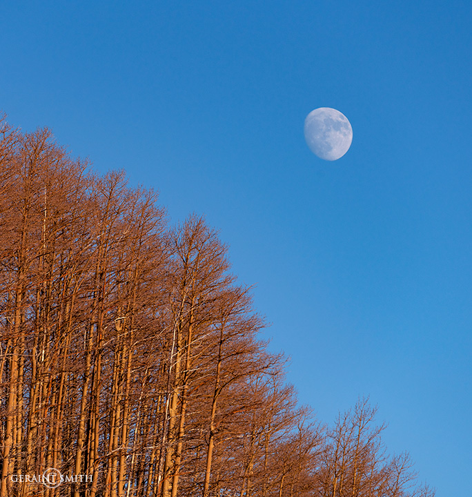 Hopewell Lake Aspen Moonrise
