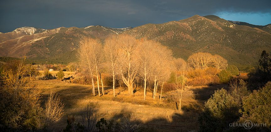 Valley Cottonwoods This Evening