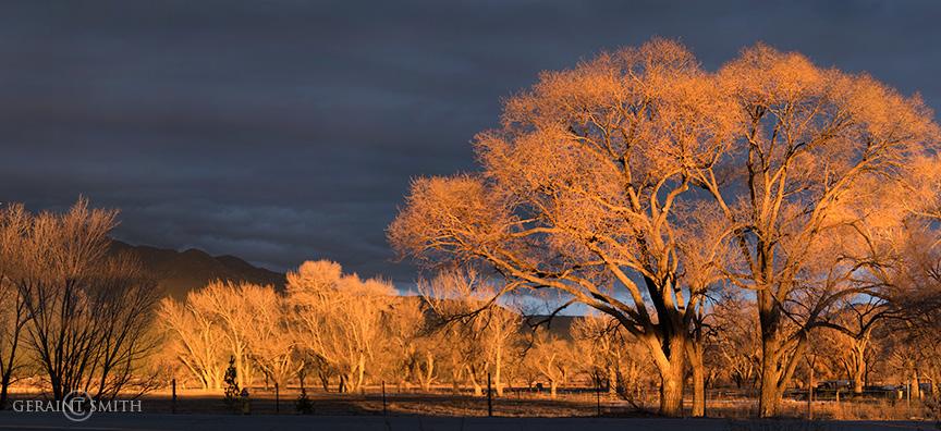 Winter Tree Light