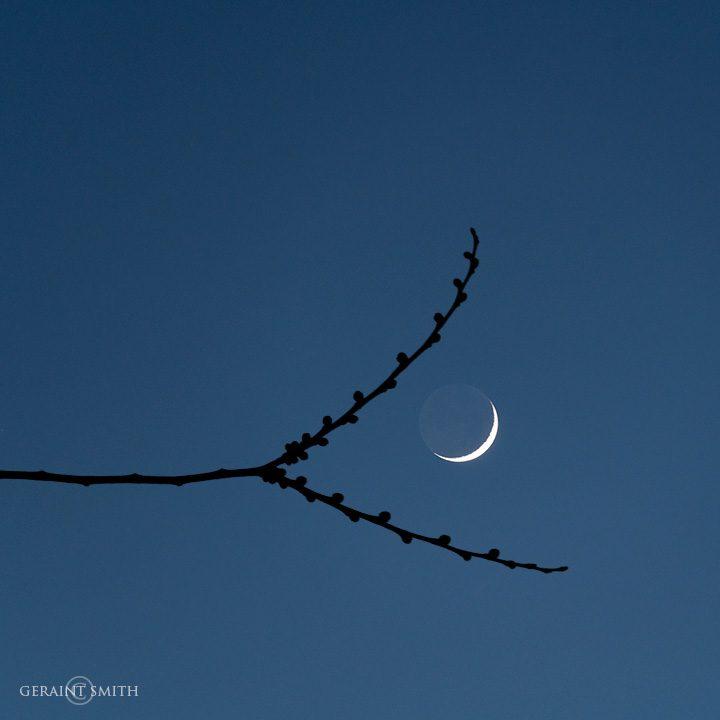 elm_tree_crescent_moon_3973-1651034