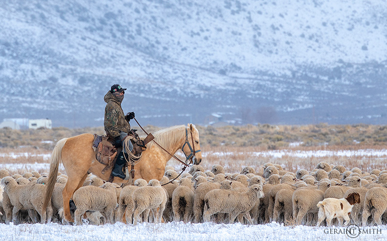 Shepherd On The Range, Southern Colorado