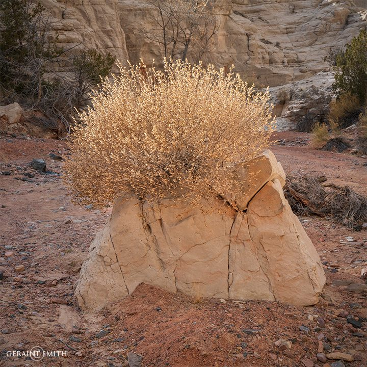rock_bush_plaza_blanca_a7r_9350_9351-4572871